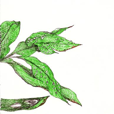 Gotas de lluivia en las hojas