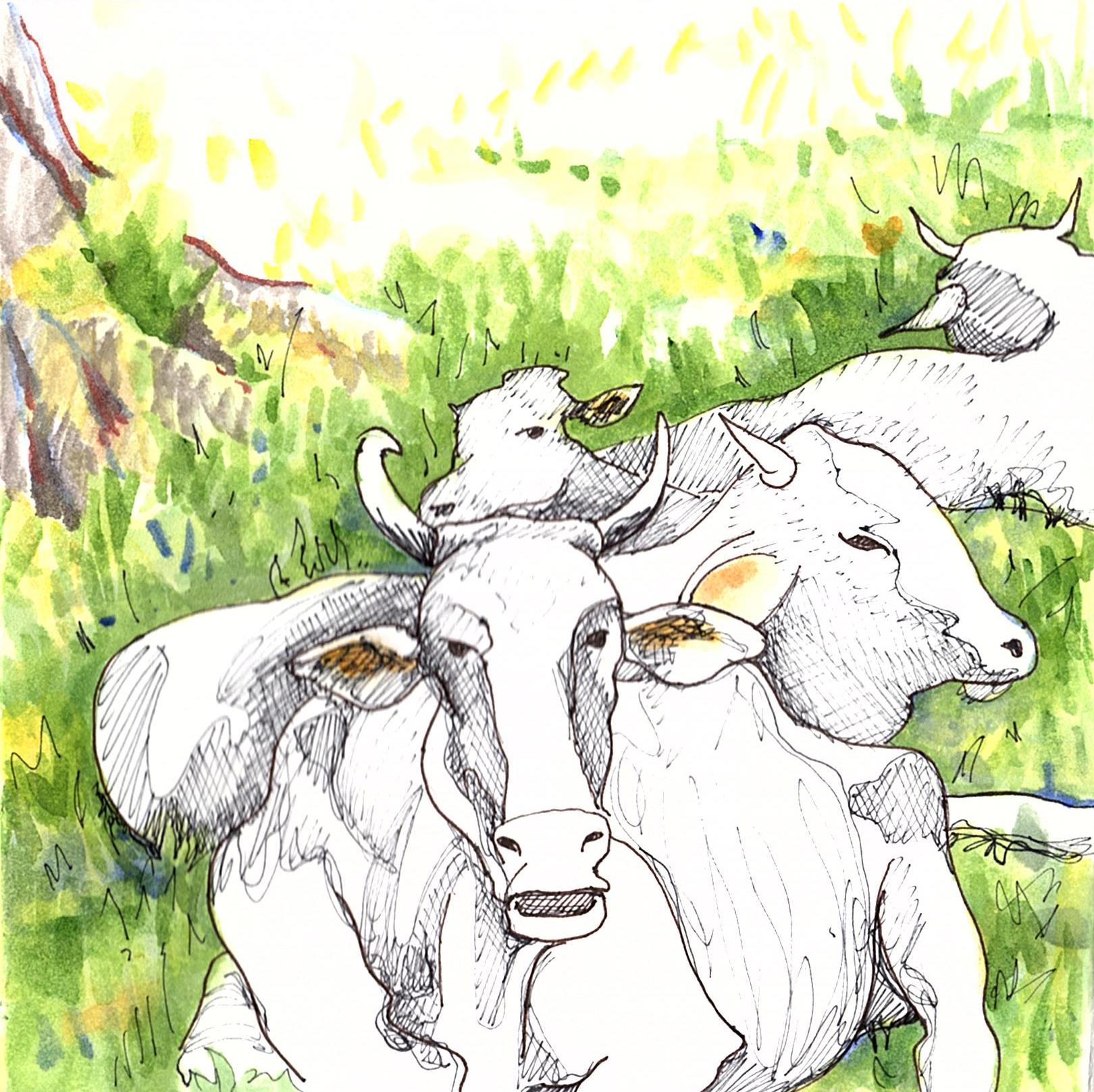Vacas blancas, Dominical