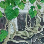 dutchmans pipe - watercolor 22in x 30in - $3000