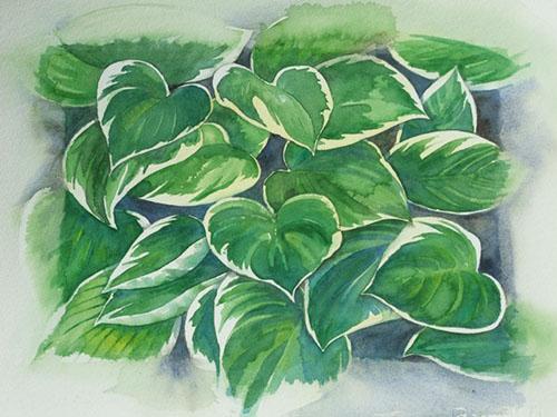hosta _ watercolor 13inx10in - $400