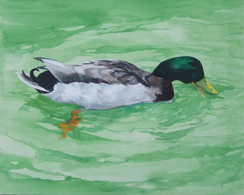 mallard _ watercolor & acrylic 16inx20in - $600